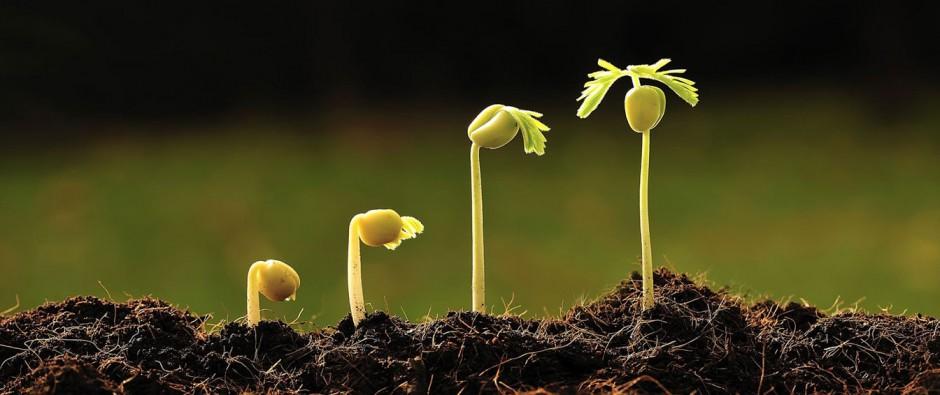 Atención al cliente multicanal en el sector agroalimentario